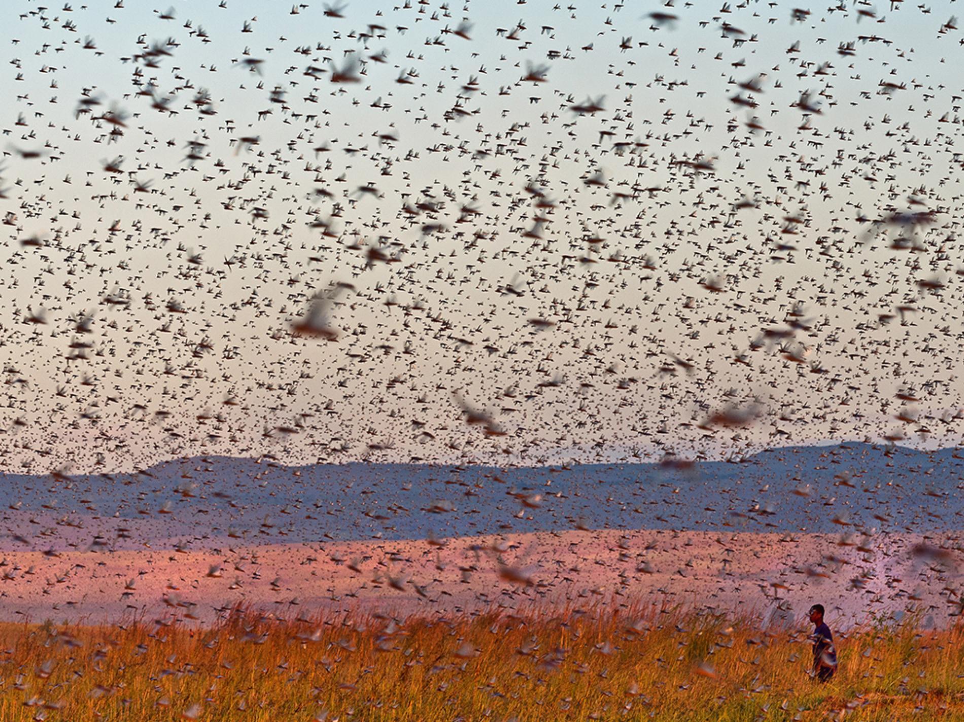 Locust invasion concerns people of Karachi