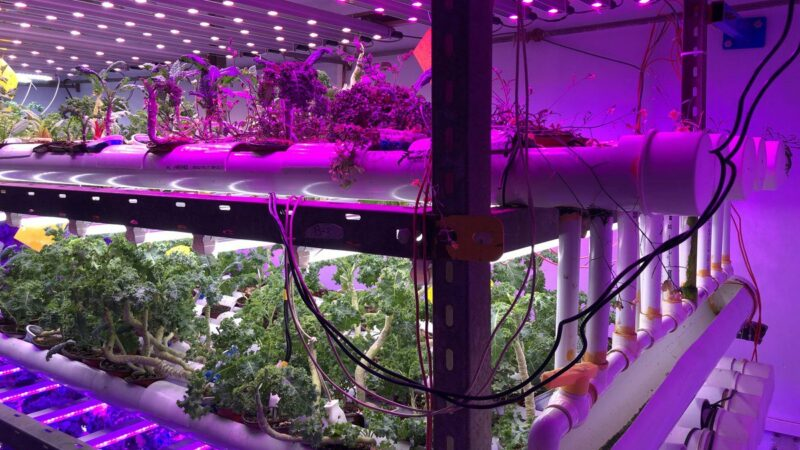 Pakistan's first vertical farm sells leafy greens to local restaurants