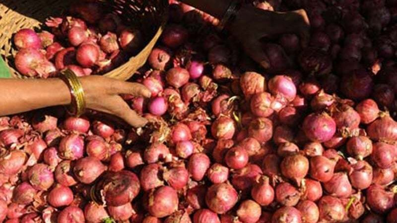 Government bans export of onions till May 31