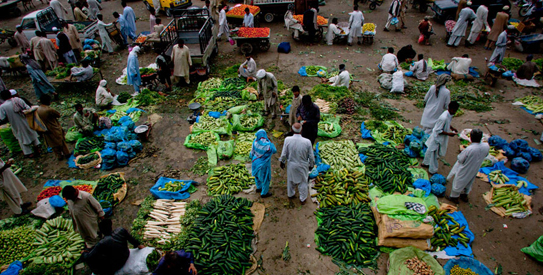 Punjab Food Authority disposes of vegetables grown in wastewater