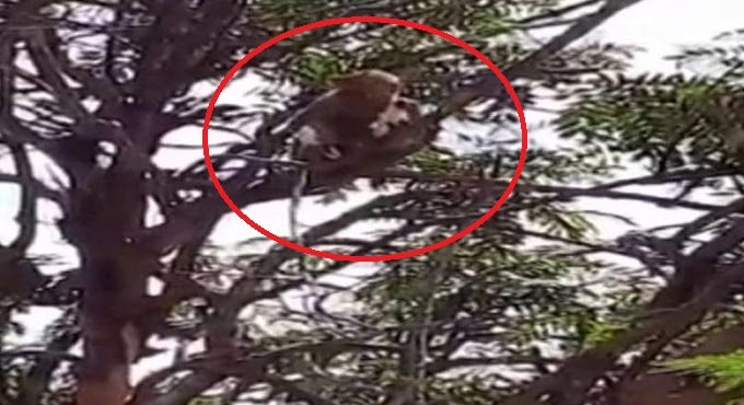 Monkeys run away with coronavirus samples in India's Meerut