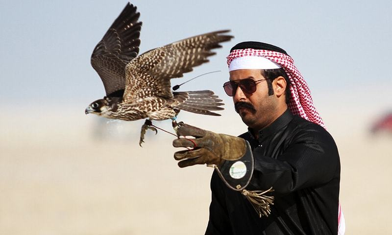 150 falcons of rare species 'exported' to Dubai ruler by Pakistan