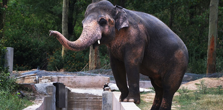 Lone elephant of Pakistan: Kaavan to finally enjoy freedom in Cambodia