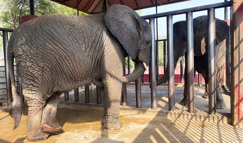 International animal rights group offers to end plight of caged elephants in Karachi