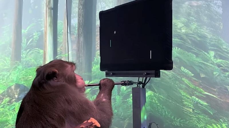 Elon Musk's company releases video of monkey playing video games with its mind