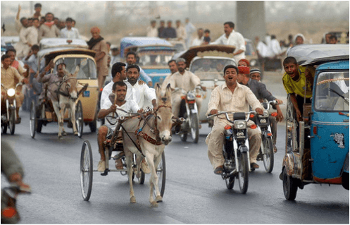 donkey cart racing