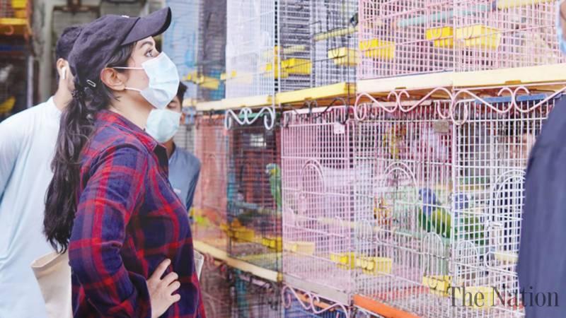 Ayesha Chundrigar, animal rights activist, rescues caged animals from Empress Market