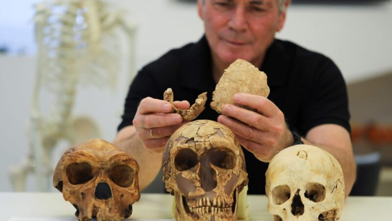 new type of early humans