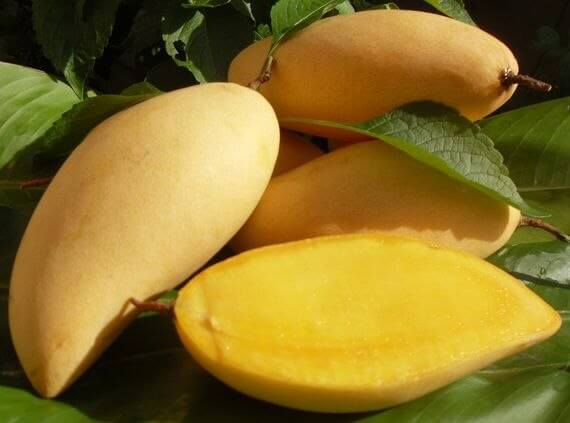 Pakistan now produces sugar-free mangoes for diabetic patients