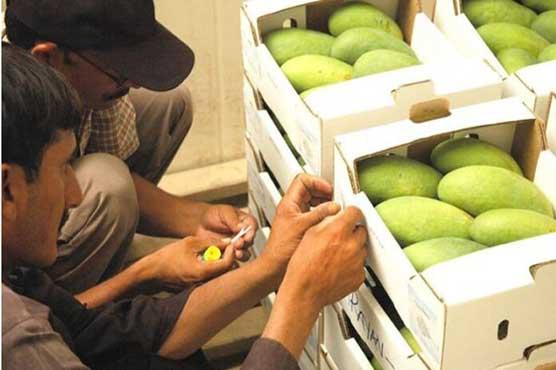 first fresh mango consignment