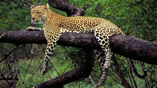 Margalla Hills National Park to get Pakistan's first Asian leopard reserve