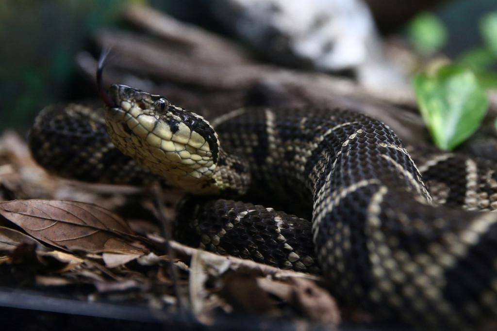 Study proves Brazilian viper venom may become tool in fight against COVID
