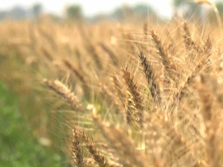 Pakistan's first digital dera is established in PakPattan to provide training to farmers on digital farming practices